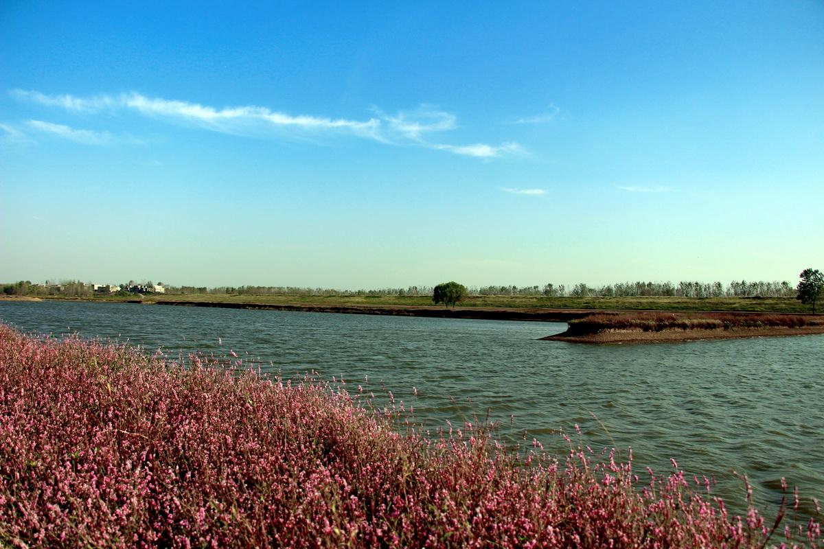 安徽阜南风景图片